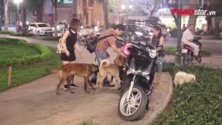 Cận cảnh đàn chó 'giẫm nát' cây cảnh mới trồng tại công viên cắm 'chông' ở Hà Nội