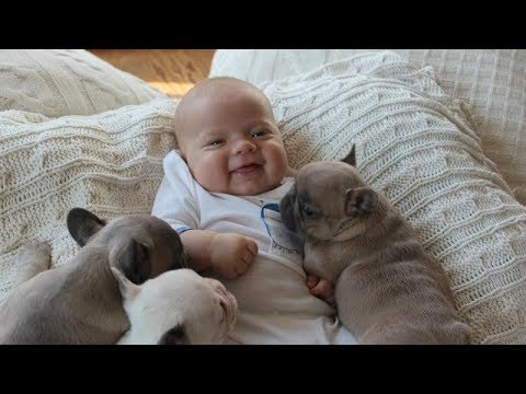 Animals Love Babies  Cute Babies & Animals Compilation