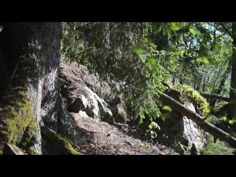 Sweden, Flottsbrobacken, walking from bridge into forest | a6000, SEL35F18, ECM-XYST1M, Beholder MS1