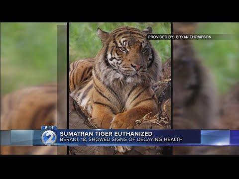 Sumatran tiger euthanized at Honolulu Zoo