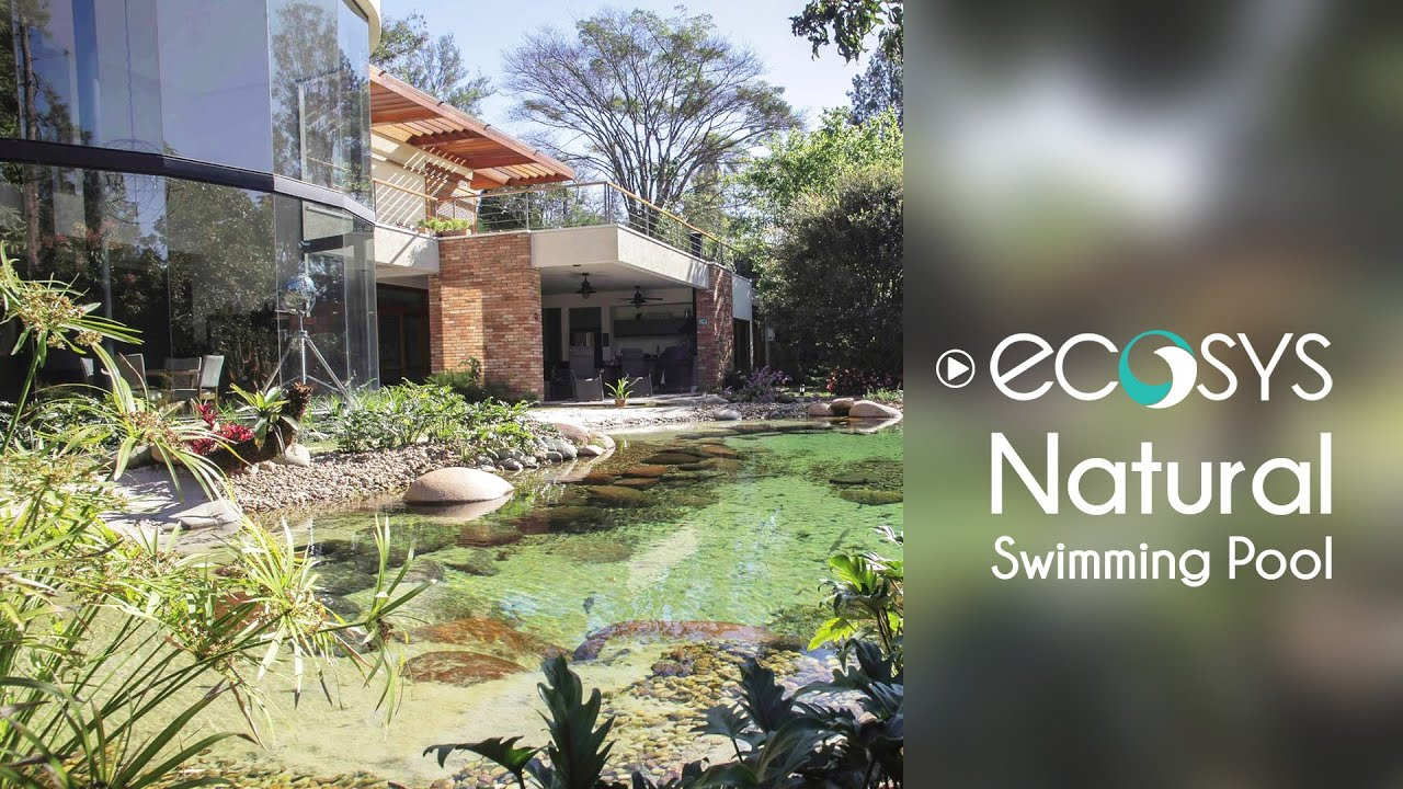 Natural swimming pool youtube for Como hacer una piscina natural en casa