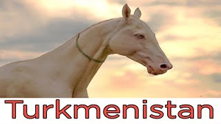 Ахалтекинская лошадь. Туркменистан / Akhal-Teke horse. Turkmenistan