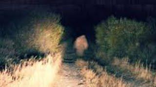 Beware of the Yucca Man.