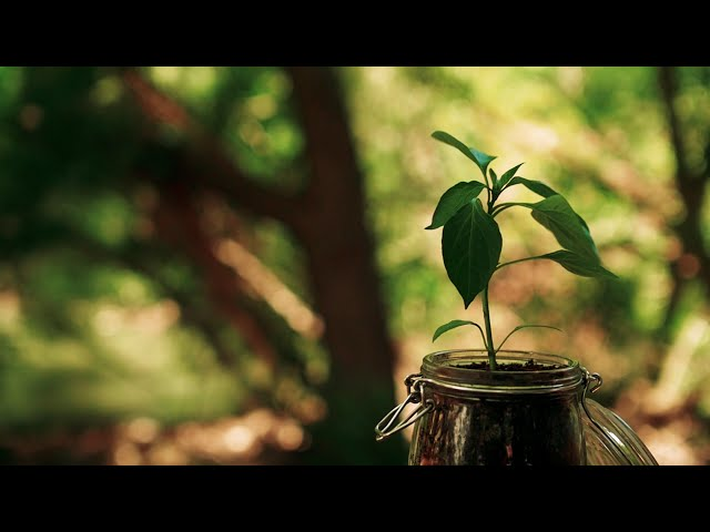 THE SEED // Inspirational Short Film
