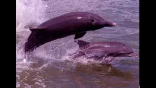 Dolphin Facts - Facts About Dolphins