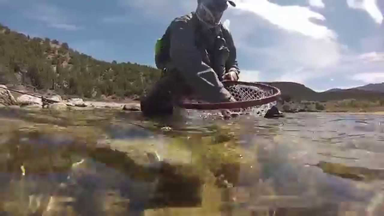 Fly fishing the green river spinner fall greenenvy 2 for Green river utah fishing report
