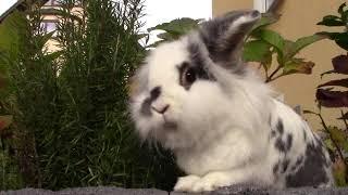 Die 6 häufigsten Kaninchenkrankheiten & wie man ihnen vorbeugen kann⚠️ | M. Mörki