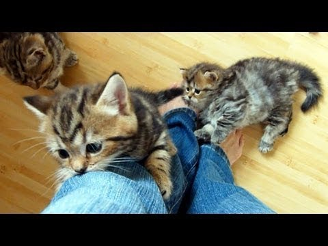 Cute Kittens Climbing On People Compilation 2018 [NEW]