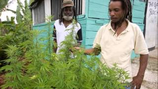 Where To Find Jamaican Weed And The Possible Prices(Where To Find Jamaican Weed And The Possible Prices Thanks for watching. If You enjoy, like, comment, share and Subscribe To See More Videos Subscribe: ..., 2016-04-18T23:35:38.000Z)