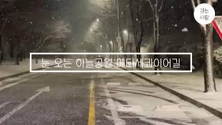 눈 오는 상암 하늘공원 메타세콰이어길 걷기