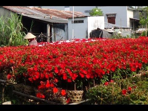Mekong delta Vietnam, Flower village in Sa Dec a week before Happy New Year Tet 2014!
