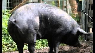 Vidéo de présentation de la Ferme Educative de Rhinau