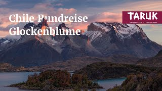 Chile Reisen: Glockenblume - Atacama-Wüste bis Patagonien
