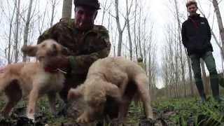 видео Охота на трюфель в Тоскане