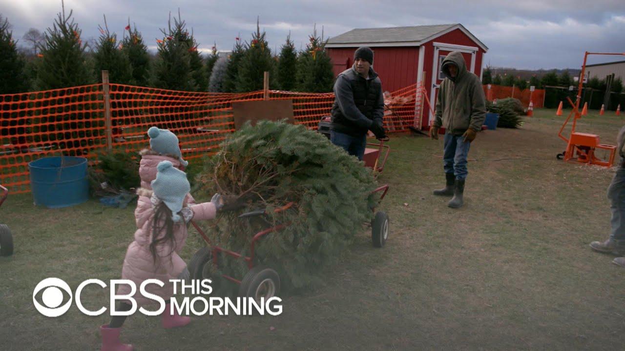Debate over real vs. fake Christmas trees heats up - YouTube