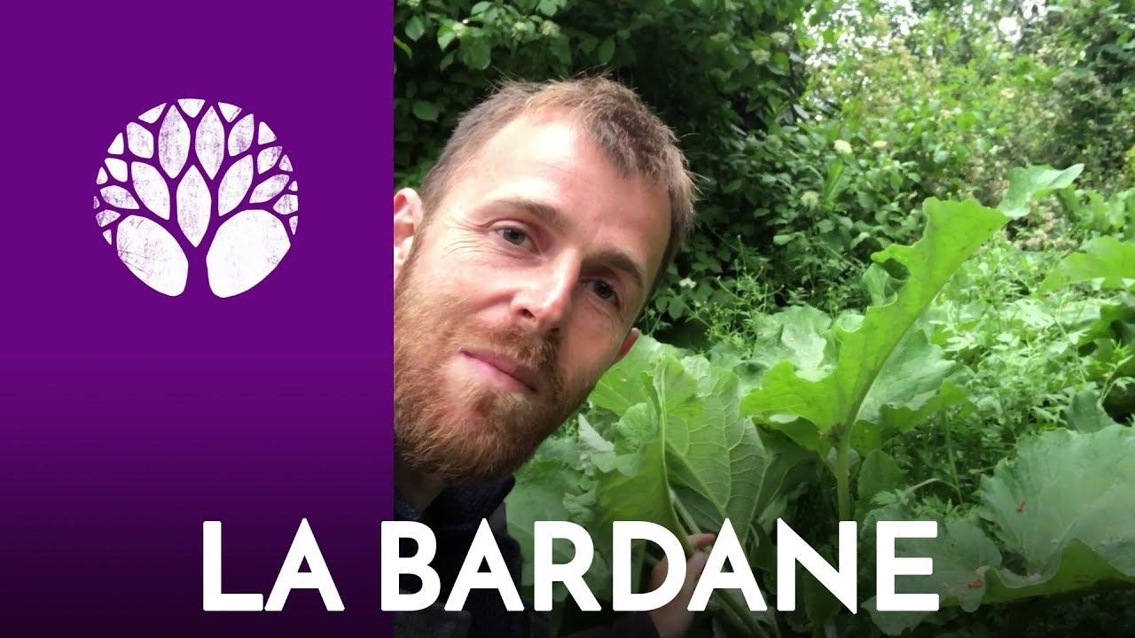 Pour remplacer l'artichaut, optez pour la Bardane !