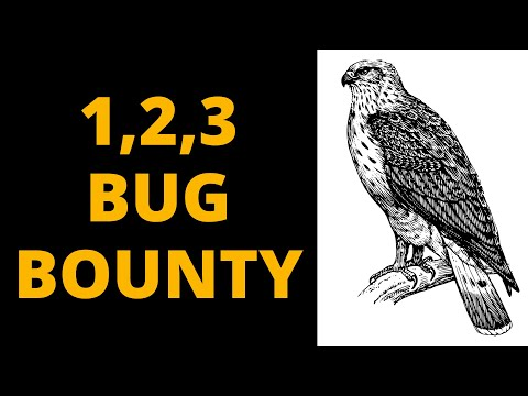Your First Steps In Bug Bounty Hunting - The Fast Way