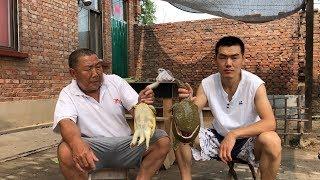 """【食味阿远】285元整了2只甲鱼,阿远做了个""""甲鱼焖鹌鹑蛋"""",堂哥说味儿不错  【Shi Wei A Yuan】"""