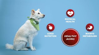 Young At Heart - Senior Dog Nutritional Support - Promote Healthy Aging with Vital Nutrients