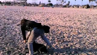 guy kicks my dog long beach california