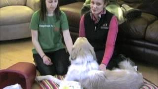 Humane Society Of Western Montana Virtual Dog Adoption Counsel