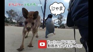 【ひびき動物ワールド】Qoocam8k 360度カメラ 3840x1920 60fps のテスト&編集テスト