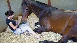 Repeat youtube video Girl and Horse - Great Bond