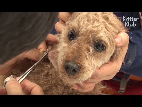 Stolen Dog Found With Scars In His Body   Animal in Crisis EP19