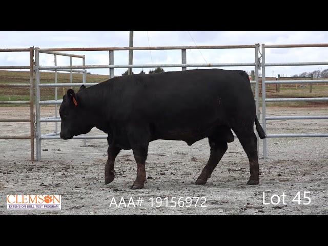 Clemson Extension Bull Test Lot 45
