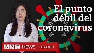 El punto débil del coronavirus que encontró una física mexicana y cómo puede servir para bloquearlo