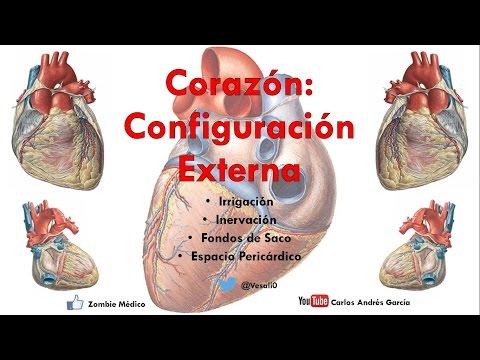 Anatomía - Configuración Externa Del Corazón (Caras, Bordes, Relaciones, Área Precordial)