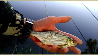 Рыбалка на донки Feeder Fishing РЫБА ДАЛА БОЙ День грязи Рыбалка на поплавок