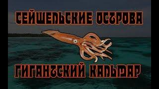 Русская Рыбалка 3 Норвегия. Гигантский Кальмар