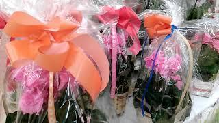 ОРХИДЕИ в Ашане к 8 Марта и много других цветов! (часть 1)