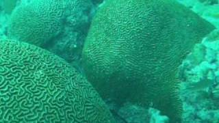 Spear Fishing In Barbados 2010, Spring.wmv