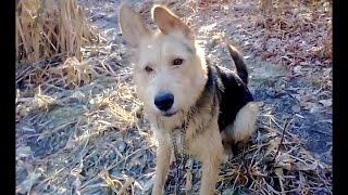 Неугомонная собака и первый осенний лед)