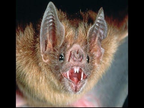 خفاش مصاص الدماء يقتحم منزل وعثرنا على اثره على وجه طفل نائم مع جمال العمواسي