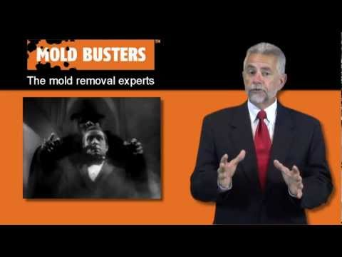 Free Mold Removal Guide by Mold Busters