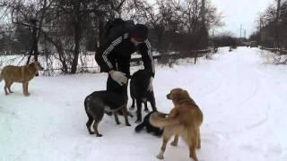 Смелый кот и голодные собаки. 25 градусов мороза.