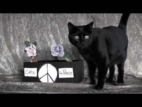 Cats For Peace - Medal Of Honor Cat -...