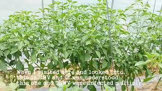 [Soil drench for plant virus 1]
