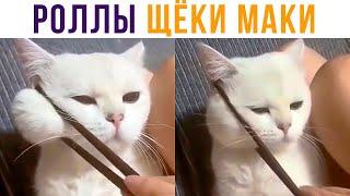 ЩЁКИ-МАКИ))) Кусьные! Приколы с котами | Мемозг 644
