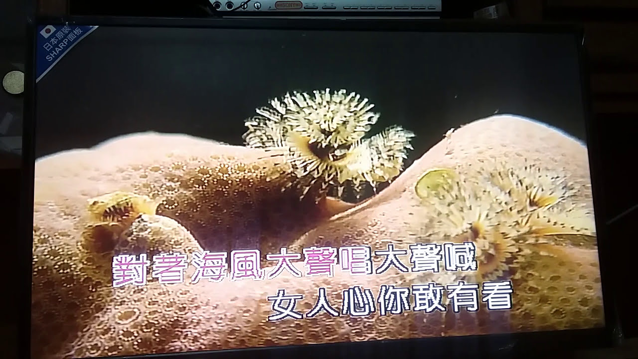 深情海岸.(男) - YouTube