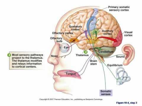 El dibujo sensitivo y expresivo de la figura humana cfnm - 2 3