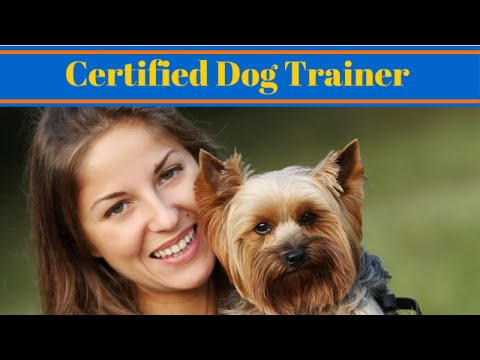 How To Become A Certified Dog Trainer - Work With Animals - YouTube