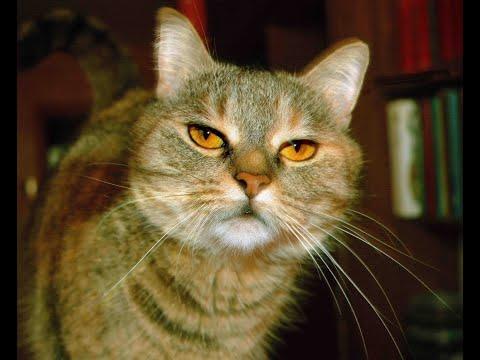 Вопрос: Как отучить кота писать мимо лотка?