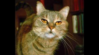 Как газетой отучить кошку гадить