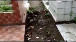 Internauta denuncia descaso no Cemitério Público de Goiana