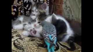 Попугай и котята  Смотреть видео