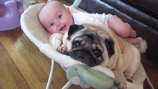 Смешное видео животные и дети